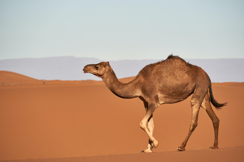 Use #CamelCase for hashtags to make your social media accessible